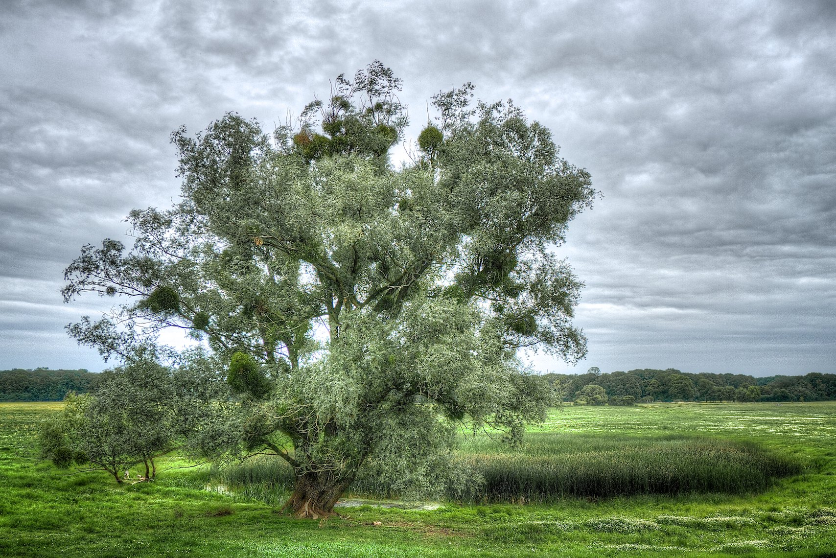 Germany Elbwiesen tree HDR