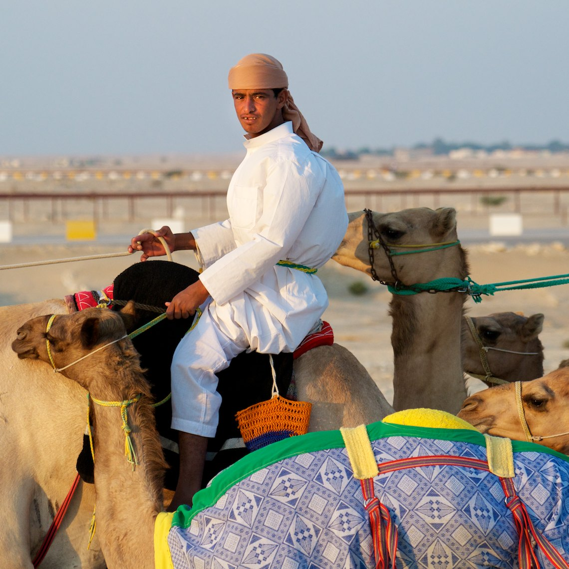 Qatar Al Shahaniya camel race training 5