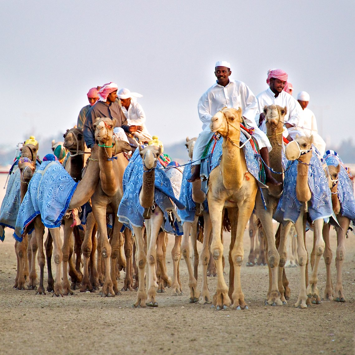 Qatar Al Shahaniya camel race training 6