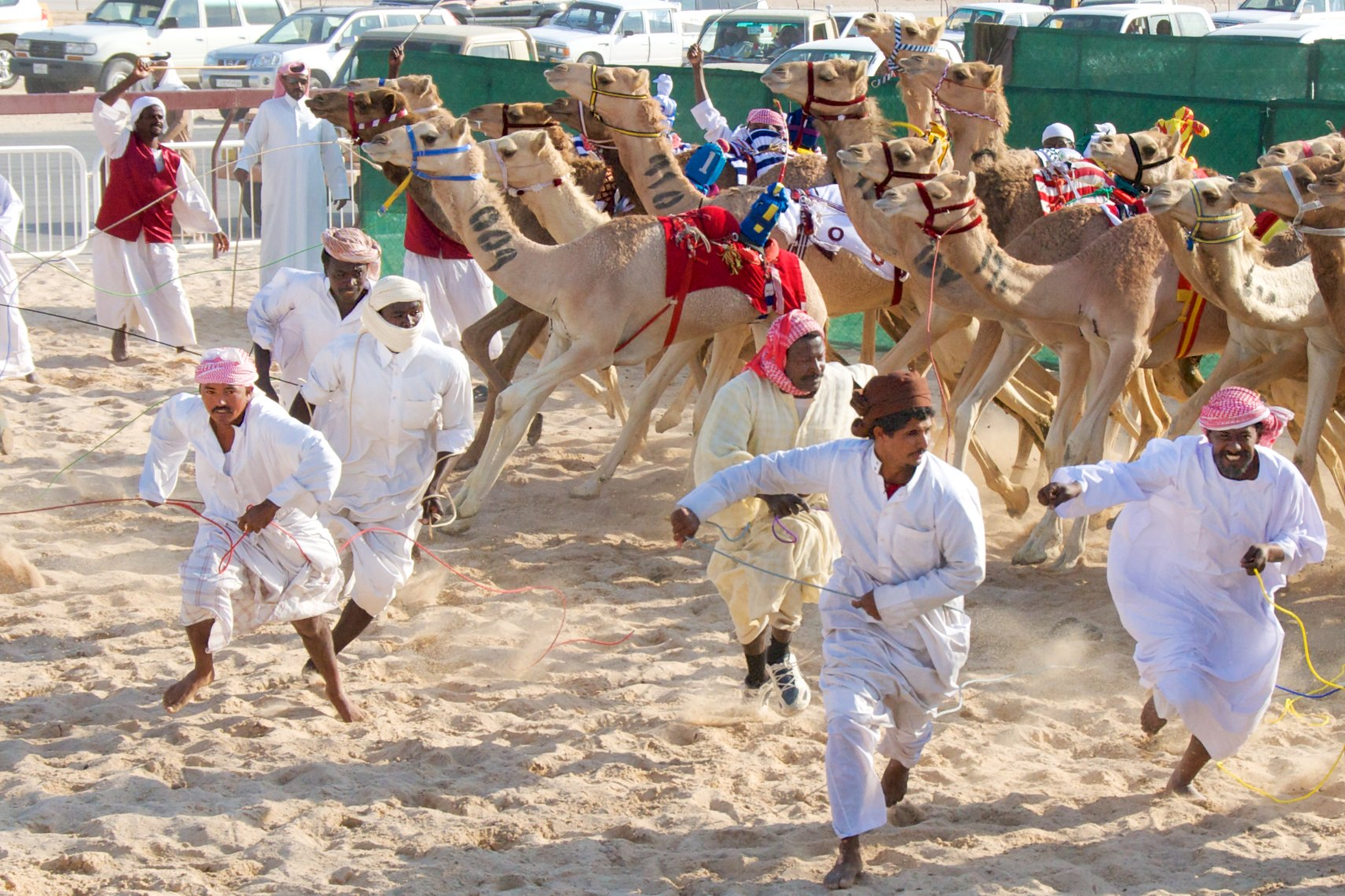 Qatar Al Shahaniya camel race at  the start 1