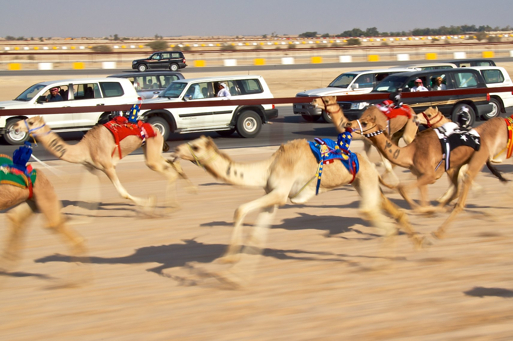 Image result for camel racing qatar