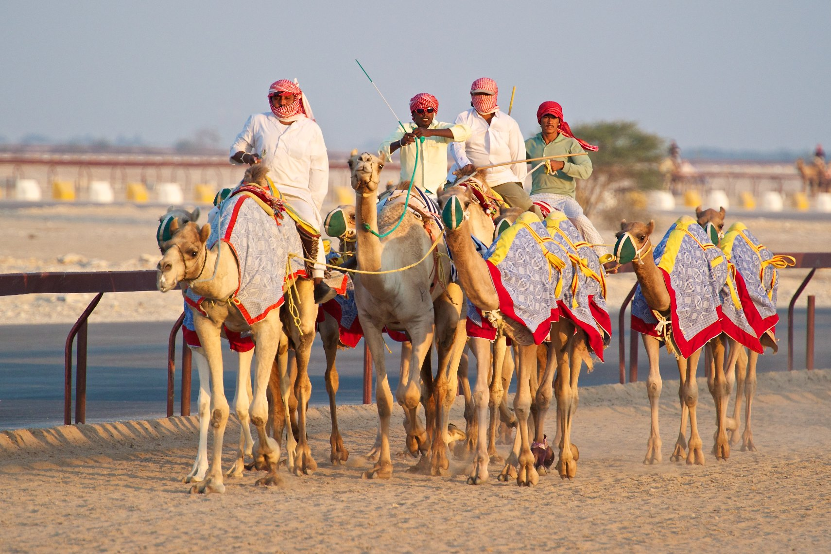 Qatar Al Shahaniya camel race training 4