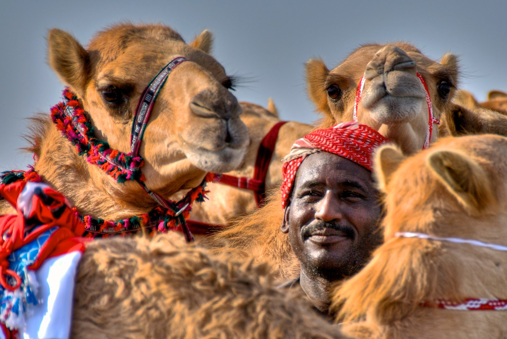 Qatar Al Shahaniya camel race, Man and Camels