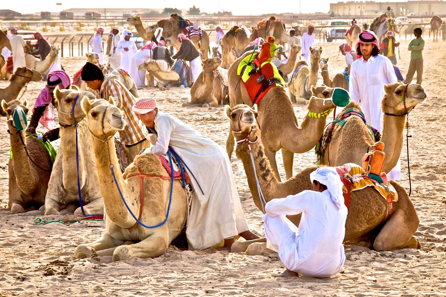 Qatar Al Shahaniya camel race before the start