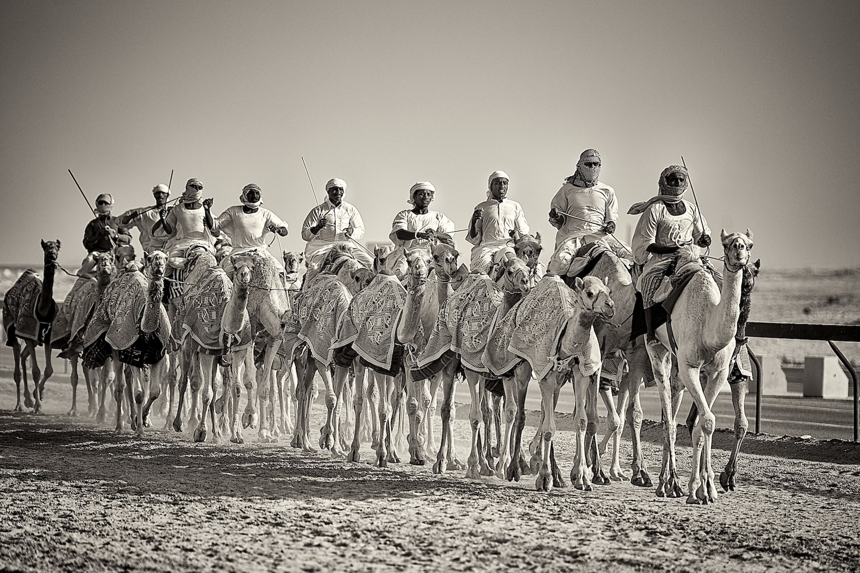 Qatar Al Shahaniya camel race training black and white