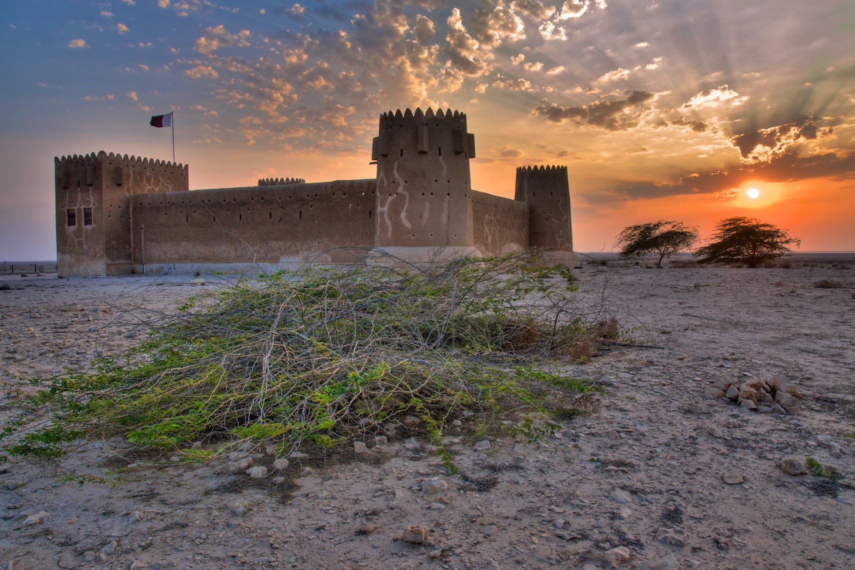 Qatar Fort Zubara shrub